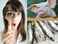 Schweine Anchovis
