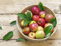 Apfelkorb - Apfelallergiker sollten vorsichtig sein