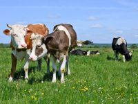 Biomilch und Biofleisch