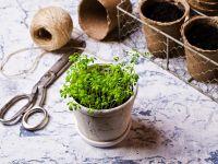 Eiweißreiches Gemüse: Brunnenkresse