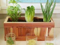 Gemüse unendlich nachwachsen lassen