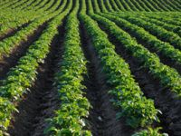 Ist der Anbau von Bio-Pflanzen immer ganz natürlich?