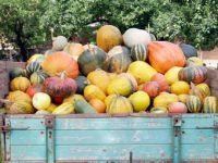 Kürbissorten: Gemüse-Highlights im Herbst