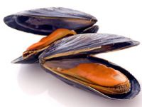 Sind offene Muscheln schlecht?