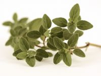 Warenkunde Oregano
