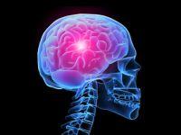 Abnehmen: Bei Hunger verdauen sich Hirnzellen selbst