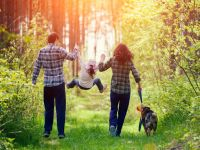 Familie mit Kind und Hund spaziert durch den sonnigen Wald