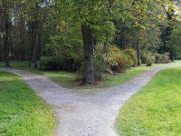 Ein Weg im Wald gabelt sich
