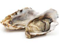Warenkunde Austern