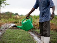 Afrikanischer Mann gießt ein Beet mit einer Gießkanne