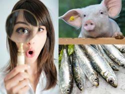 In der Nahrungskette gleichwertig: Schweine, Anchovis und der Mensch. © MasterLu - Fotolia.com