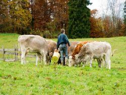 Ein Biobauer schaut auf das Futter seiner Tiere © AlexF76