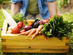 Curated Food – auch Biokisten gehören dazu. © gpointstudio - Fotolia.com