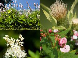 Wer essbare Wildpflanzen sammeln möchte, sollte in paar Dinge beachten.