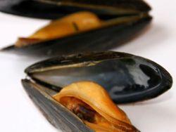 Sicherer Muschelgenuss