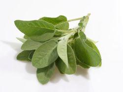 Hilft Salbei bei Halsschmerzen?