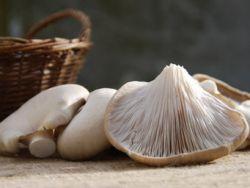 Kalorienarm und lecker: Austernpilze