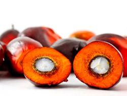 Palmöl – so begehrt wie umstritten