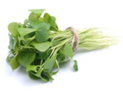 Portulak – es lohnt sich das Gemüse zu suchen