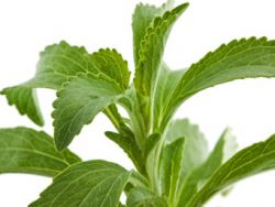 Süße ohne Reue - Stevia machts möglich!
