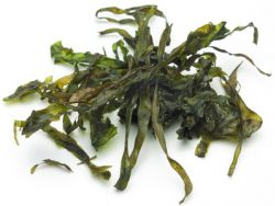 Kelp: der braune Riesenseetang