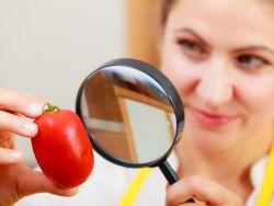 Frau nimmt Tomate unter die Lupe