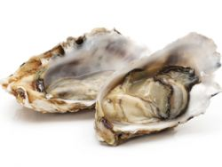 Was man über Austern wissen sollte.