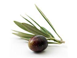 Oliven werden seit Jahrtausenden geschätzt!