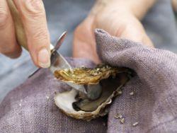 Austern öffnen