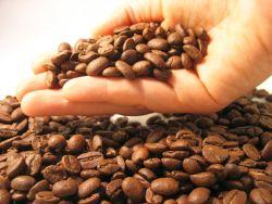 Handvoll Kaffeebohnen