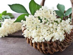 Holunderblüten sind gesund