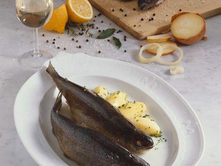 Forelle Blau mit Petersilienkartoffeln