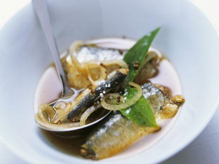 Ölsardinen in Marinade aus Zwiebeln und Balsamessig