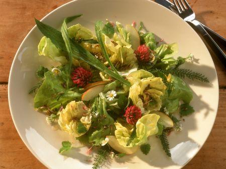 Sommersalat mit Spitzwegerich, Gänseblümchen und Kräutern