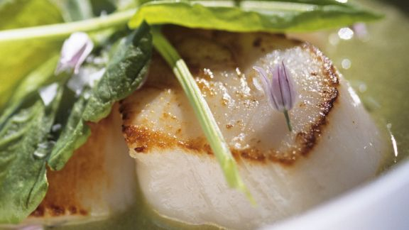 Rezept: Gebratene Jakobsmuscheln in Suppe aus Kräutern