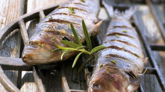 Rezept: Gefüllte gegrillte Sardinen