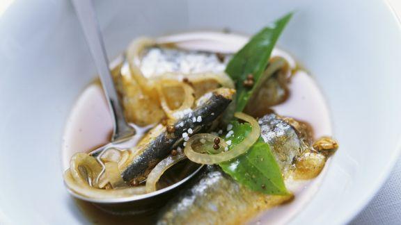 Rezept: Ölsardinen in Marinade aus Zwiebeln und Balsamessig