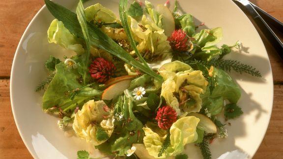Rezept: Sommersalat mit Spitzwegerich, Gänseblümchen und Kräutern