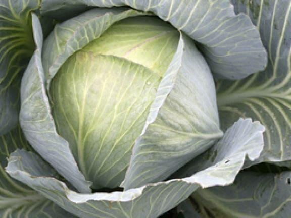 Kohlgemüse - eine vitaminreiche Nahrungsquelle