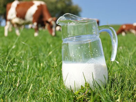 Viele Leute schwören auf die Milch-Diät.