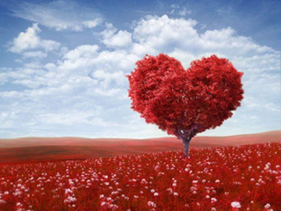 Valentinstagsgeschenke versüßen den Tag der Liebenden.