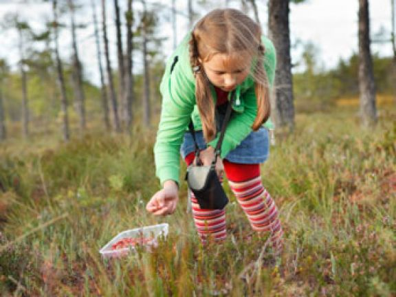 Kinder pflücken gerne Wildobst