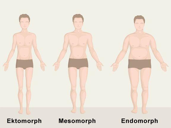 Grafik mit Körpertypen ektomorph, mesomorph, endomorph