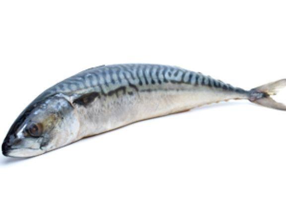 Was man über die Makrele wissen muss.