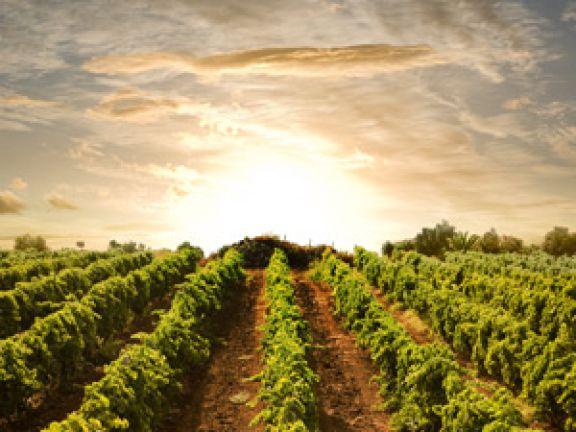 Weintourismus in Deutschland