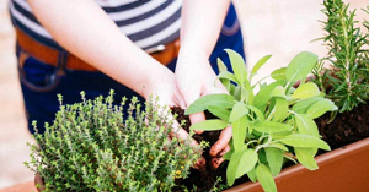 kräuter anpflanzen einfach & schnell | eat smarter, Garten und erstellen