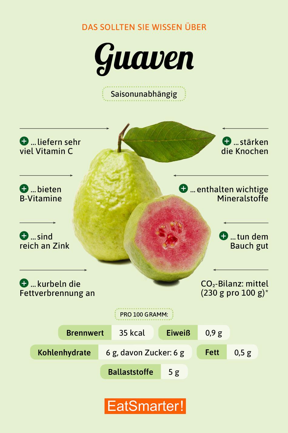Infografik Guave
