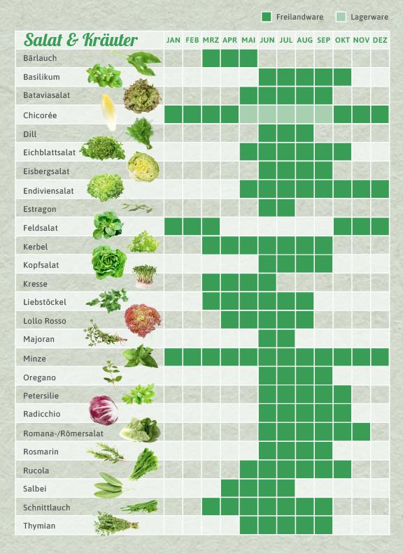 Saisonkalender Salat & Kräuter