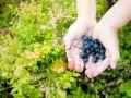 Beeren selbst sammeln: ein Spaß für Kinder!