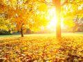 Herbstfeste feiern wie sie fallen